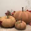 Grungy Pumpkins